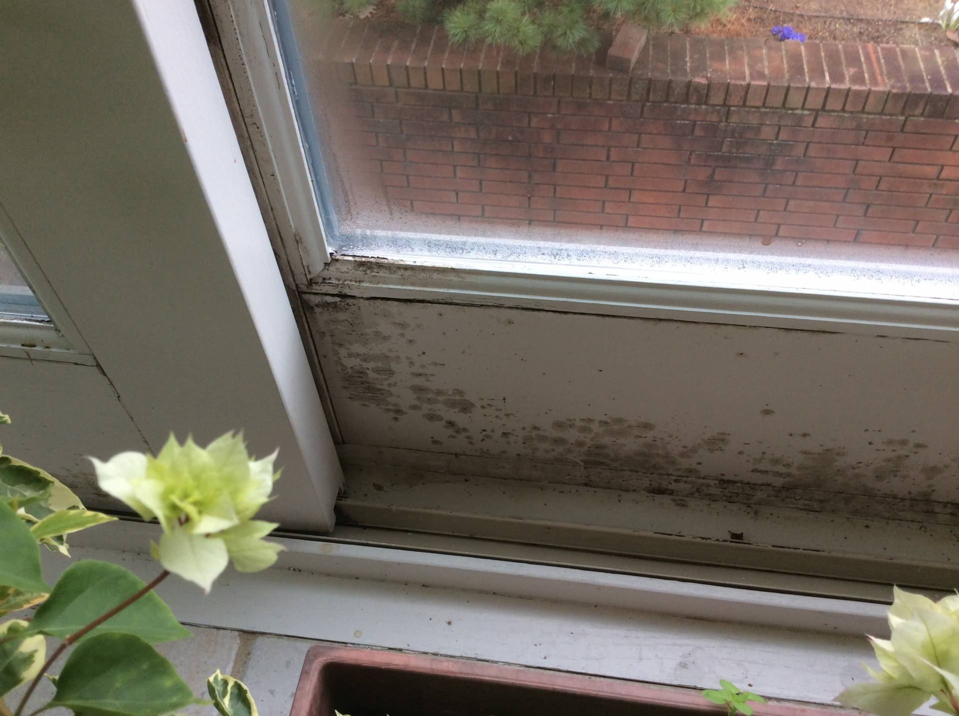Moldy Window Frame