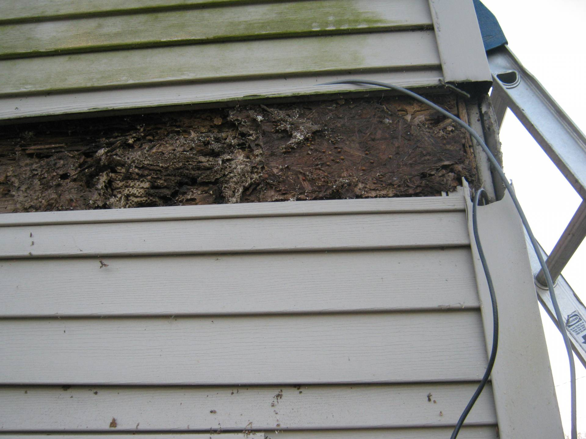 Decay on Siding